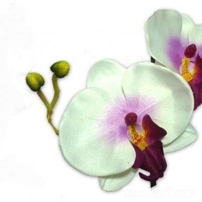 orchid es sur tige d coration de mariage un jour sp cial. Black Bedroom Furniture Sets. Home Design Ideas