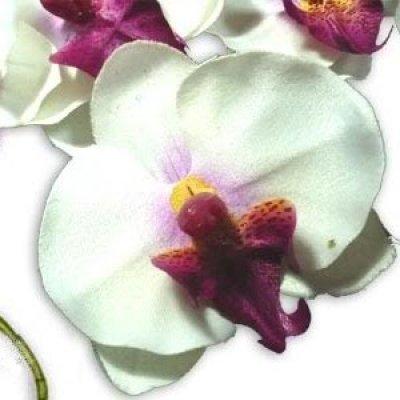 Orchid es sur tige blanche fleurs artificielles d co mariage un jour sp cial - Deco mariage orchidee ...