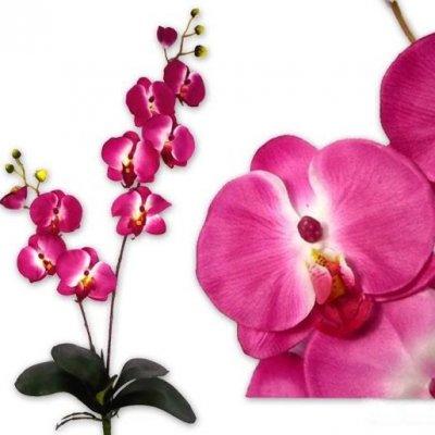 fleurs fushia pour mariage. Black Bedroom Furniture Sets. Home Design Ideas