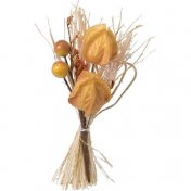 12 bouquets nature physalis mandarine